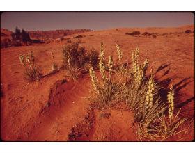 Moab, Utah, USA (fot. David Hiser - w domenie publicznej)