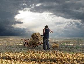 Niska rentowność charakteryzuje polskie rolnictwo (CC By-ND koppdelaney)