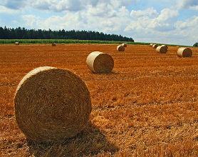 Dotacje dla rolników – konieczność czy marnotrawstwo