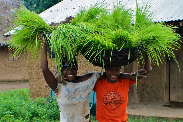 Afryka i genetyka mogą przyczynić się do stabilizacji cen żywności