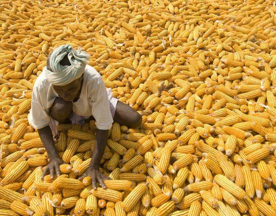Nowa norma: wysokie ceny żywności przez lata