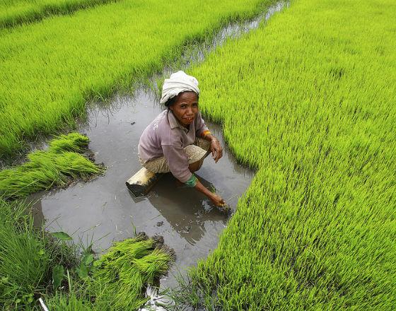 O 1,7 bln dol. wzrośnie popyt na żywność w krajach rozwijających się