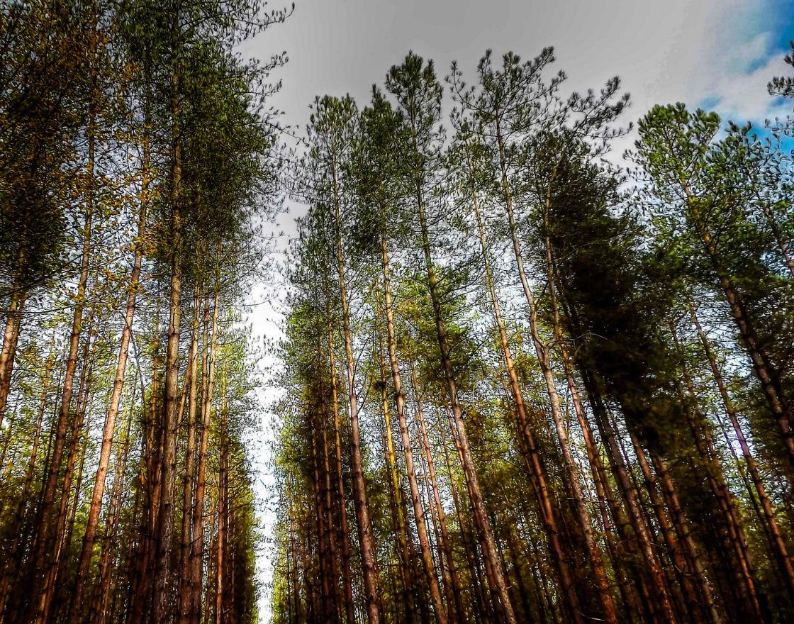 Lasy państwowe, ale czy aby na pewno?