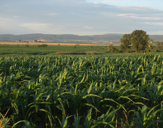 Na Węgrzech trwa wielka wyprzedaż gruntów ornych