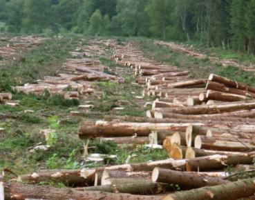 Nie czas żałować lasów