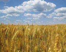 Ukraiński spór o handel ziemią