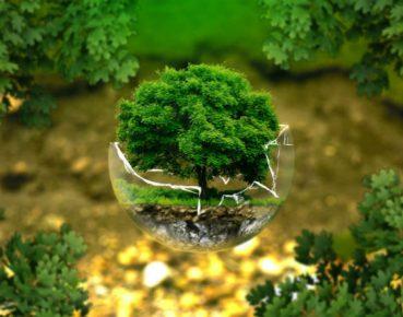 ochrona srodowiska CC0 pixabay