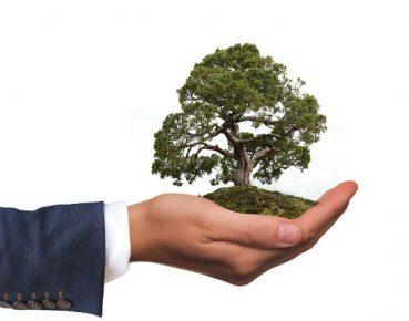 zielone finanse environment CC0 Pixabay