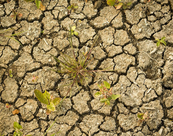 Skutki suszy mniej straszne, niż się zanosiło
