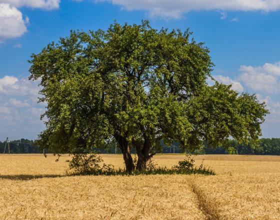 Ukraińskie rolnictwo ekstensywnie do przodu