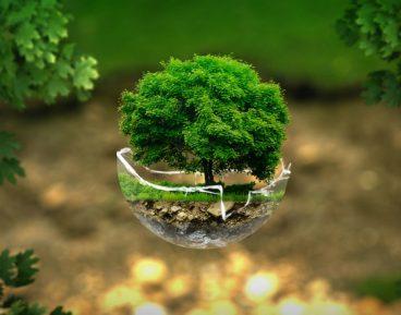 Rośnie zaangażowanie banków centralnych w ochronę środowiska