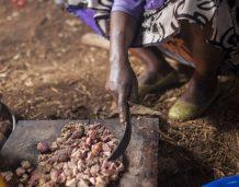 Zanikająca bieda