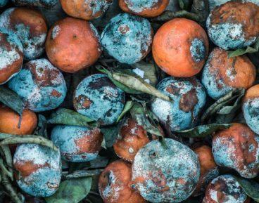 Ekonomia ekologiczna: zasoby z odpadków