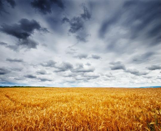 Ukraina: czy zostanie zniesiony zakaz handlu ziemią?