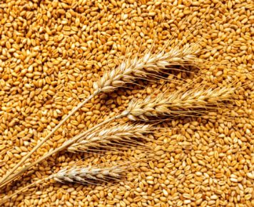 Rosyjskie rolnictwo – sukces transformacji rynkowej
