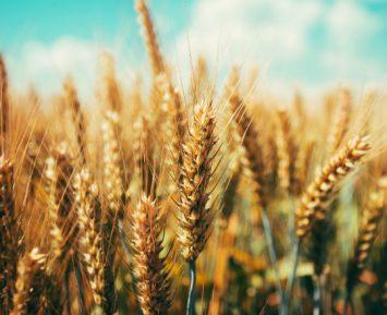 Rolnictwo w czasie pandemii
