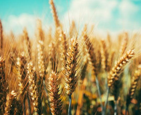 Ukraina – rolnicze sny o potędze