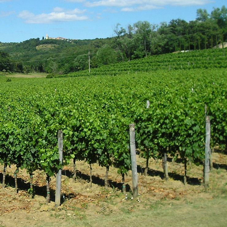 Croatian wine industry becomes stronger