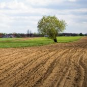 Arable land in Europe is becoming increasingly expensive
