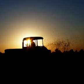 The dead end of the EU's Common Agricultural Policy