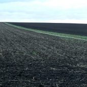 Ukraine will lift the ban on agricultural land trade