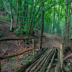 Ukraine forest kwadrat