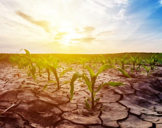 Bez wody gospodarka Ukrainy wyschnie na wiór