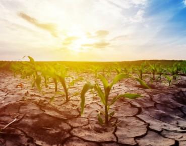 Without water, Ukraine's economy will wilt