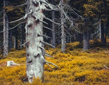 Lasy znikają wolniej, ale pandemia im nie służy