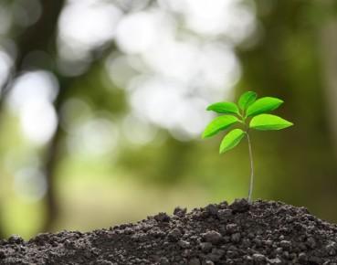 Bank Światowy: historyczna szansa na zieloną i sprawiedliwą transformację