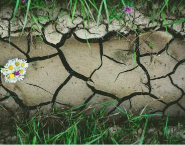 Technologia zastąpi intuicję rolników