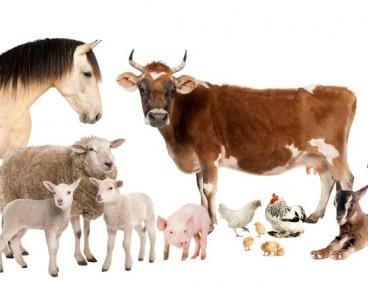 Za 50 lat spożycie prawdziwego mięsa będzie luksusem