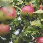 Polish apples seek to conquer Vietnamese market