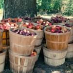 Russian ban worries Bosnia's fruit producers