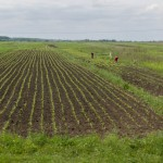 Ukrainian land to be leased at land auctions