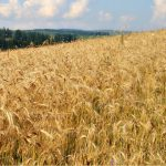 UAE group takes over the biggest grain farm in Romania