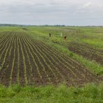 Ukraine: moratorium on farmland sale extended until 2020