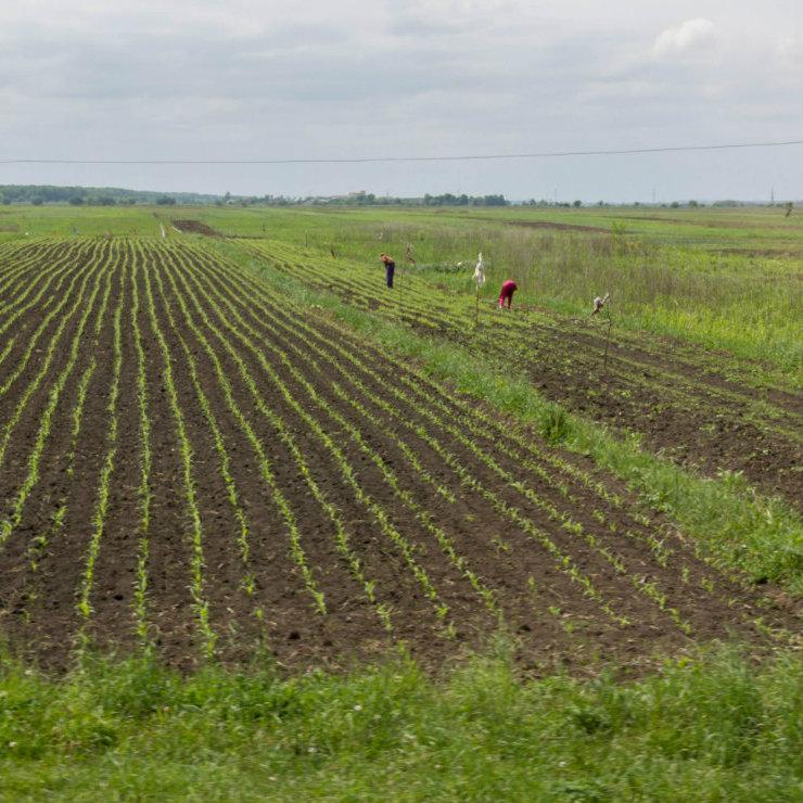 Ukraine: moratorium on farmland sale extended until 2020