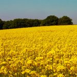 Central Europe backs locally produced biofuels