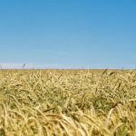Ukraine to lift moratorium on farmland sale by year-end
